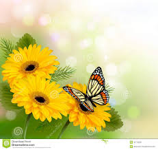 nature background with yellow beautiful flowers an royalty free