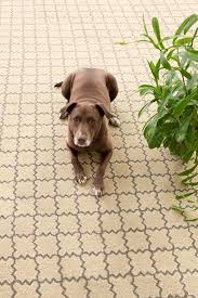 Mud Rugs For Dogs Mud Season Madness Choosing A Rug For The Mudroom