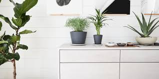 what u0027s keeping you awake at night with the right house plants