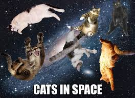 Meme Space - cats in space funny space meme picture