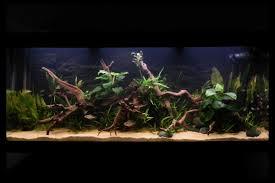 aquarium aquariums