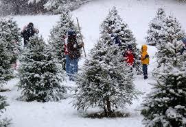 Helms Christmas Tree Farm - christmas christmas tree farms charlotte nc image ideas inistmas