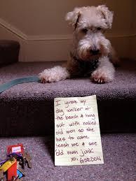 Dog Shaming Meme - dog shaming man s best friend acts a fool 27 pics kill the hydra