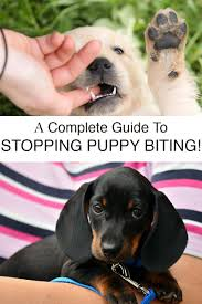 how to get dog to stop barking biting puppy a complete guide to stopping puppies biting the