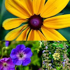 Gold Flowers 187 Best Jmu Purple And Gold Images On Pinterest Flowers Purple