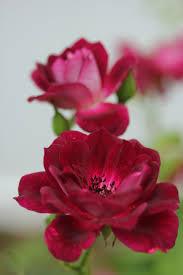 335 best это красиво images on pinterest nature beautiful
