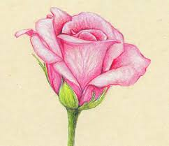 pencil drawings of flowers and butterflies with colours google