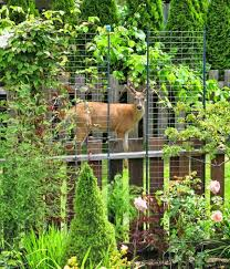 how to animal proof your garden urban home and garden east bay
