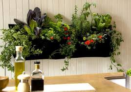 know these indoor garden plant ideas kerala latest news kerala
