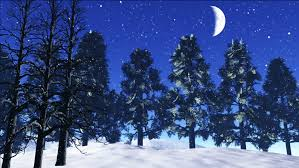 twinkle in the sky snow fall in winter trees shake in