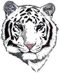 white tiger designs tiger outline images