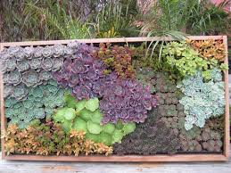 Outdoor Wall Hanging Planters by This Is A Wall Mounted Succulents U201ccollage U201d U2013 All The Rage On