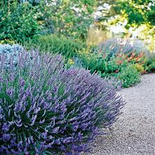 25 best plants landscaping and gardening images on pinterest