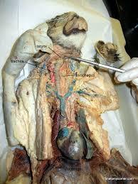 respiratory system anatomy corner