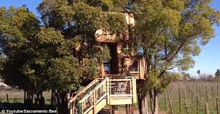 I Have Built A Treehouse - treehouse masters couple have to tear out kitchen after officials