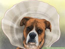 boxer dog jaw how to spot an epulis in dogs 11 steps with pictures wikihow