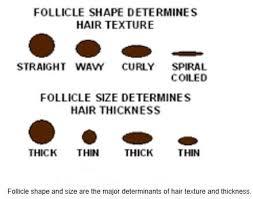 male pubic hair shapes hair dr rajiv desai