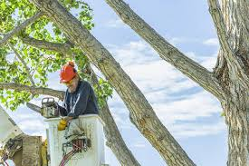 6 best tree care service companies in houston tx abc tree service