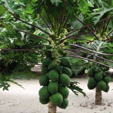 Plants Easy To Grow Indoors Tropical House Plants Easy To Grow Indoor Plants And Trees