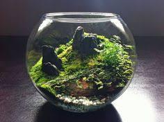 diy found moss terrarium moss terrarium terrarium and terraria