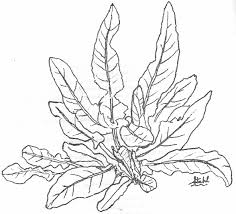 new plant coloring pages 4 2382
