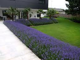 atrium in rot und violett gartengestaltung gartenplanung