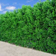 Good Backyard Trees by 130 Best Gates And Fencing Images On Pinterest Privacy Fences