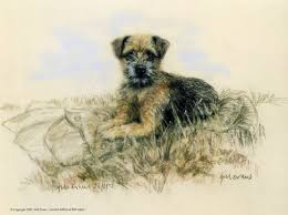 border terrier prints limited edition prints and