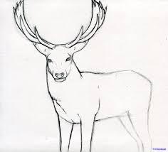 luxury easy deer buck drawings 99 for your with easy deer buck