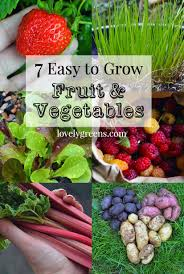 Vegetables You Can Regrow by 7 Easy To Grow Fruits U0026 Vegetables Garden Living And Making With