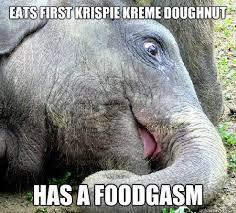 Doughnut Meme - eats first krispie kreme doughnut funny elephant meme