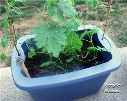 Diy Self Watering Herb Garden Condo Blues How To Make A Self Watering Planter From A Plastic
