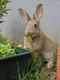 rabbit garden pest 101 how to keep rabbits out of your garden