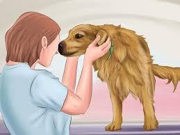 how to make dogs love you with pictures wikihow