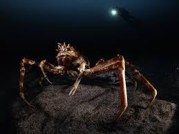 giant sea creature pictures giant sea creature photos photo