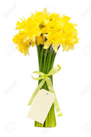 bouquet of beautiful daffodils isolated on white background stock