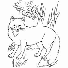 top 10 free printable jungle animals coloring pages online
