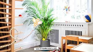 green decor room by room guide for plants at home