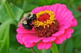Flowers Bees Pollinate - flower power bee culture