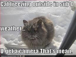 Freezing Cold Meme - cat freezing graceport