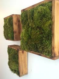 moss and best 25 moss garden ideas on growing moss moss