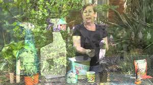 How To Get Rid Of Backyard Flies by How To Get Rid Of Aphids U0026 White Flies On Basil Garden Space