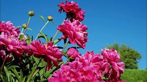 beautiful nature images hd nature beautiful flowers gardens
