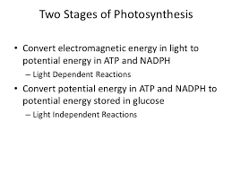 Light Independent Reactions Definition Photosynthesis Light Dependent Reactions