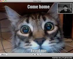 Feed Me Meme - littlefun come home feed me