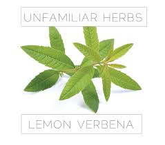 lovely what to do with what to do with lemon verbena it smells wonderful every time you