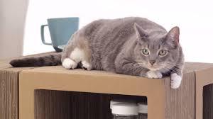 Modern Cat Scratching Post Katris Is U2026 A Cat Scratching Post A Bookshelf A Coffee Table A