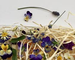 Dry Flowers Tiny Dried Flowers Etsy