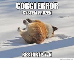 Corgi Lawyer Meme - 25 irresistibly funny corgi meme sayingimages com