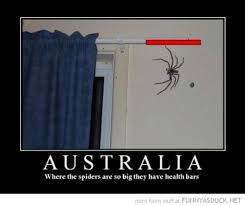 Cute Spider Meme - funny spider pictures w630